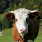 Do One Thing: Grass-Fed Beef